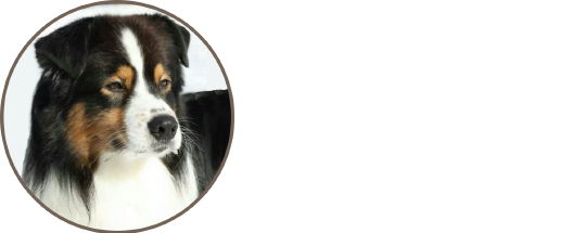 TK Rocks Australian Shepherds
